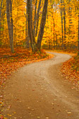 fall, road, yellow, colors, winding road, trees, fall colors, leaves, ground, dirt road, sky